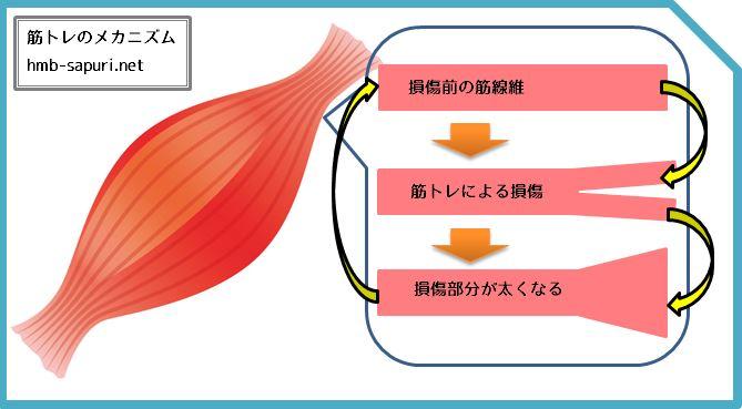 HMBサプリと筋トレの関係